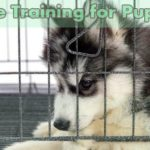 How Long Does It Take to Crate Training for Puppies
